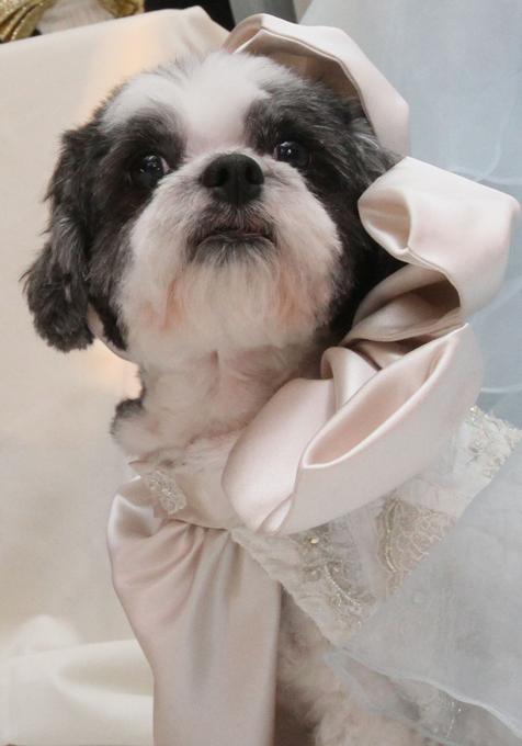 Собачья свадьба за $158000 Расходы на свадьбу включили в себя дизайнерское платье для четвероногой невесты, оркестр для выступления и роскошный банкет с деликатесами на любой вкус.  Читайте: Интересное за неделю: собачья свадьба попала в книгу Гиннесса свадьба,собаки,рекорд Гиннеса