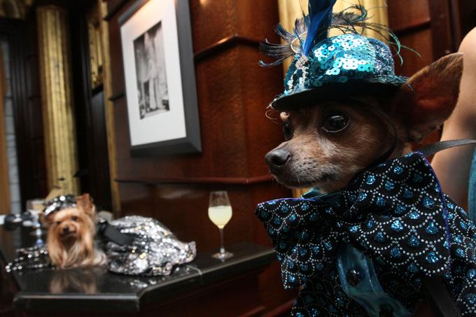 Собачья свадьба за $158000 Собранные средства пойдут в компанию Human Society - крупнейшую в США организацию по охране животных - на исследования заболеваний раком у четвероногих. свадьба,собаки,рекорд Гиннеса