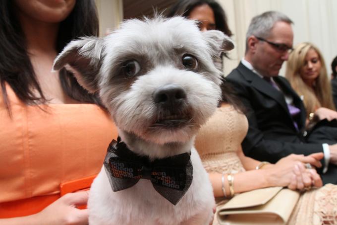 Собачья свадьба за $158000 Смотрите все самые занимательные фотографии в разделе: Интересное свадьба,собаки,рекорд Гиннеса
