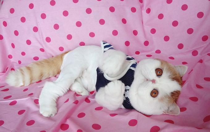Самая популярная кошка в мире В середине прошлого века американский художник Чарльз М.Шульц придумал и нарисовал песика Снупи - антропоморфного бигля, снискавшего массовую популярность. А сегодня всемирной известности добился кот из Китая, которого так и зовут - песик Снупи (Snoopydog). Снупи, кот, Китай, самый популярный, художник Чарльз М.Шульц