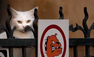 В подвалах жилых домов сделают домики для кошек
