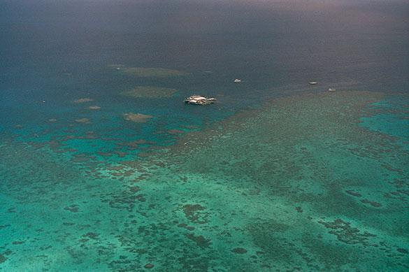 В Австралии вымирают кораллы
