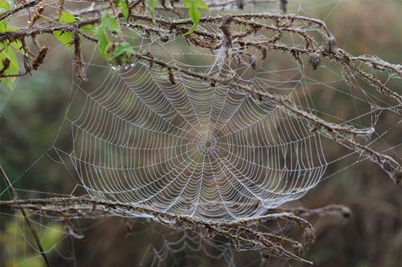 Всего год понадобится паукам, чтобы съесть всех людей на планете