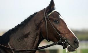 Лошади — страсть или бизнес?