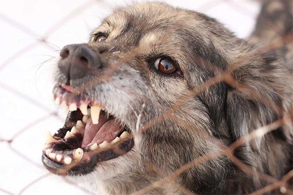 Бродячие собаки продолжают убивать детей