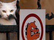 Ученые выяснили, почему кошки пьют аккуратнее собак