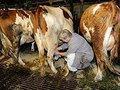 Куда исчезают субсидии для сельского хозяйства