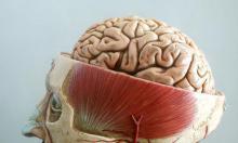 """Ученые: У иммунных клеток мозга шесть """"жизней"""""""