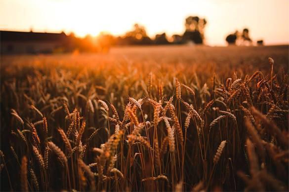 Путин: Доход от сельхозэкспорта превысил доход от продажи оружия