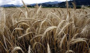 Риски по урожаю зерна: Пошлины страшней морозов