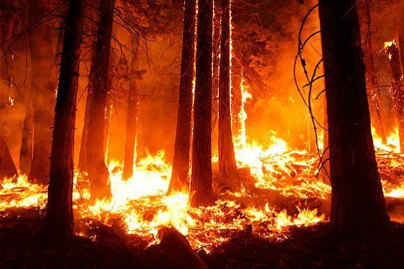 Можно ли победить лесные пожары?