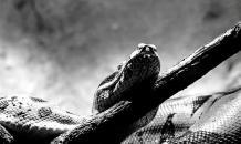 В скальных районах Мадагаскара обнаружен новый вид змей
