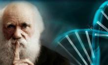 Турецким школьникам запретили изучать теорию эволюции Дарвина