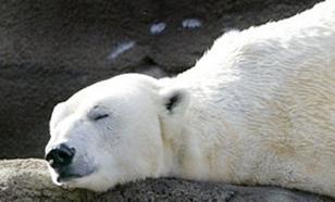 Взорвавшего медведицу на острове Врангеля привлекли к уголовной ответственности - СМИ