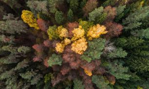 """На форуме """"Единой России"""" обсуждают вопросы сохранения лесов"""