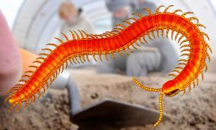 В США откопали неизвестных науке гигантских древних многоножек