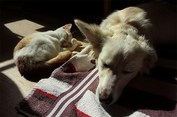 Парламент Тайваня запретил есть гражданам кошек и собак. Наконец-то!