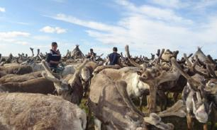 Ямал: Cельское хозяйство в Арктике