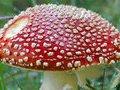 Призраки привлекаются токсичными испарениями грибов - ученые