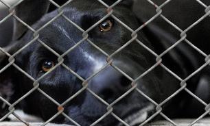 Жертвами хабаровских живодерок стали не менее 15 животных