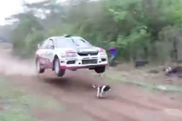 Мистическое везение: Собаке удалось проскочить под гоночным авто за секунду до трагедии. ВИДЕО