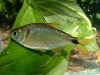 Рыбы тоже приносят сородичей в жертву