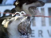 Как спастись от агрессивной собаки