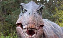 Вулканы сгубили динозавров раньше, чем астероид