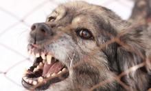 Стая собак загрызла пенсионерку недалеко от Кремля