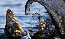 Экологи: Число позвоночных на планете с 1970 года уменьшилось более чем в два раза