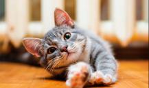 Ученые: кошки предпочитают еде общение с людьми