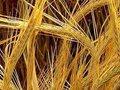 Вячеслав Телегин: Зависимость сельхоза от зарубежных технологий снизилась