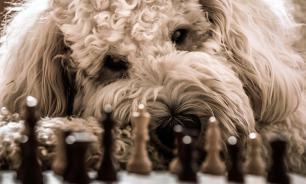 Ученые доказали: собаки умеют читать мысли