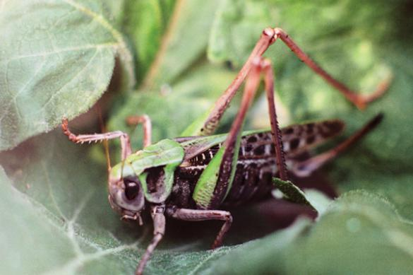 Доказана польза поедания насекомых