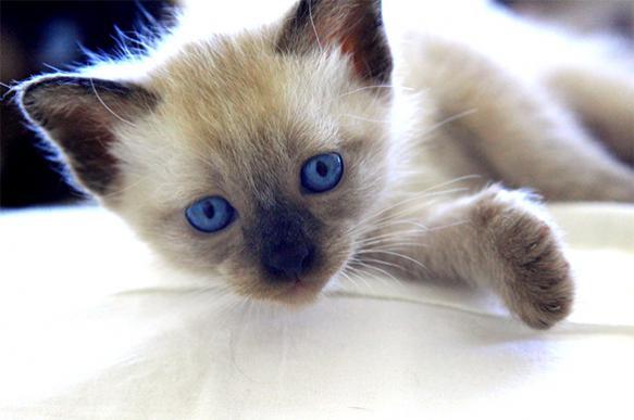 Компания Alibaba открыла вакансию кота