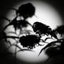 Жизнь подобна зебре: черные полосы чередуются светлыми промежутками. И когда она движется, мы видим преимущественно серый цвет. Но можно раскрасить картину будней.