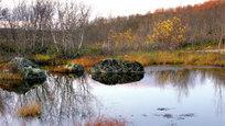 Своеобразна природа Заполярья. Горные массивы, озера... Устланные зеленым мхом низины, серебрящийся на возвышенных местах ягель. Сильный, одуряющий запах багульника. Яркие, трогательно-нежные цветы.