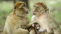 Не только люди могутлюбитьдругдруга.Животныетоже испытываютчувства к себе подобным. И данные фотографии это наглядно доказывают.