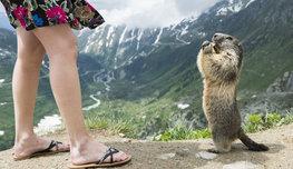 В мире животных все гораздо веселее и оригинальнее, чем рассказывал Николай Дроздов, — посмотрите сами! P.S. Эти комедии основаны на реальных событиях…