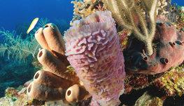 Подводная одиссея нашего времени пестрит белоснежными кораллами и разноцветными фейерверками из тропических рыбок…