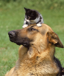 Как кошка с собакой...
