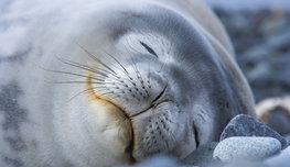 Жизнь есть сон , - писал Педро Кальдерон. Посмотрите, кто готов проспать всю жизнь, хоть стоя, хоть в толпе, хоть в море!