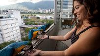 Эскадрильи попугаев ара над столицей Венесуэлы