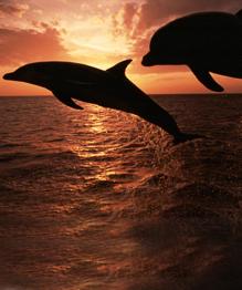 Тайны дельфинов