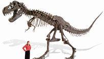 Скелет динозавра, кошачье место и такси-броневик