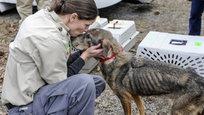 Кадр дня: спасение собак, волшебное Рождество и слезы по Фергюсону
