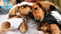 Собачья свадьба, коралловая катастрофа и кот-зомби