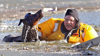 О чудесных спасениях, совершенных собаками на воде, слышали, наверное, все. Но иногда и самих братьев наших меньших приходится спасать.