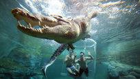Заглянуть в пасть крокодила