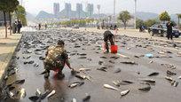 Жить в Китае очень интересно: можно собирать рассыпавшуюся по дороге рыбу, проверять свою стойкость к холоду, купаясь в ледяных ваннах, можно забраться на башню высотой 632 метра или можно просто задыхаться от смога